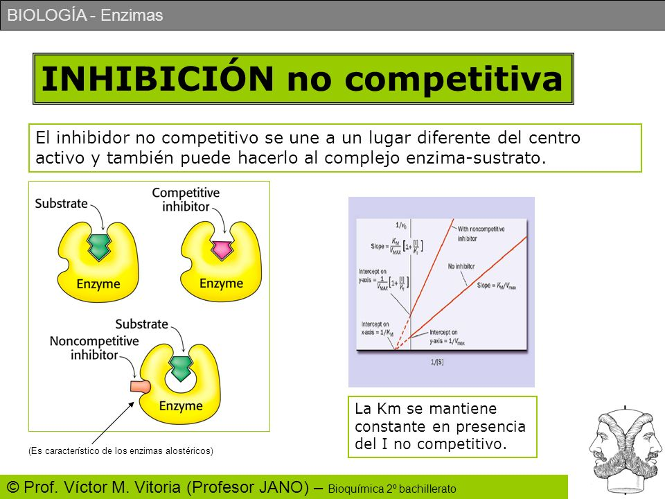 BIOLOGÍA - Enzimas © Prof. Víctor M. Vitoria (Profesor JANO) – Bioquímica 2º bachillerato INHIBICIÓN no competitiva El inhibidor no competitivo se une