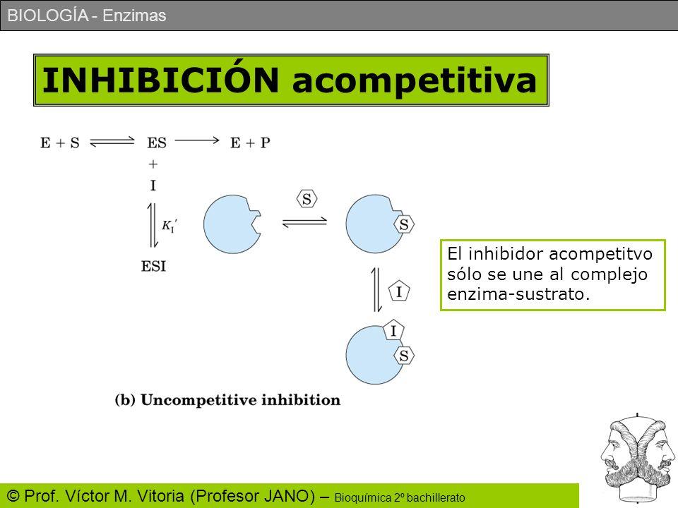 BIOLOGÍA - Enzimas © Prof. Víctor M. Vitoria (Profesor JANO) – Bioquímica 2º bachillerato INHIBICIÓN acompetitiva El inhibidor acompetitvo sólo se une