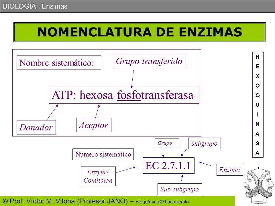 BIOLOGÍA - Enzimas © Prof. Víctor M. Vitoria (Profesor JANO) – Bioquímica 2º bachillerato NOMENCLATURA DE ENZIMAS ATP: hexosa fosfotransferasa Nombre