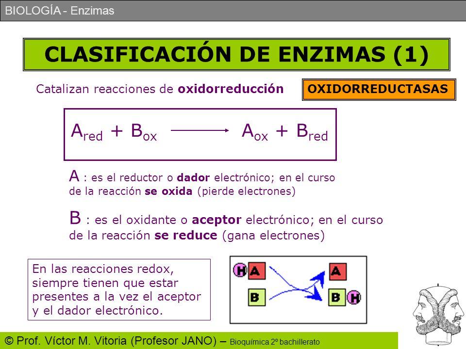 BIOLOGÍA - Enzimas © Prof. Víctor M. Vitoria (Profesor JANO) – Bioquímica 2º bachillerato CLASIFICACIÓN DE ENZIMAS (1) Catalizan reacciones de oxidorr