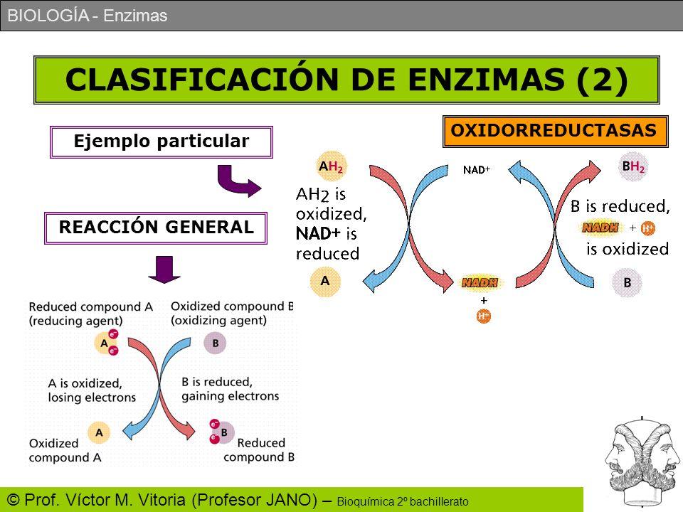 BIOLOGÍA - Enzimas © Prof. Víctor M. Vitoria (Profesor JANO) – Bioquímica 2º bachillerato CLASIFICACIÓN DE ENZIMAS (2) OXIDORREDUCTASAS REACCIÓN GENER