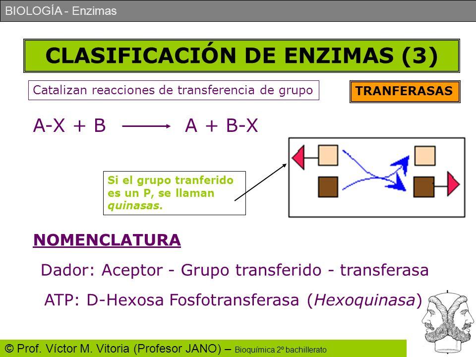 BIOLOGÍA - Enzimas © Prof. Víctor M. Vitoria (Profesor JANO) – Bioquímica 2º bachillerato CLASIFICACIÓN DE ENZIMAS (3) TRANFERASAS Catalizan reaccione