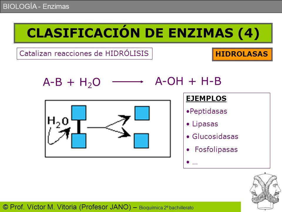 BIOLOGÍA - Enzimas © Prof. Víctor M. Vitoria (Profesor JANO) – Bioquímica 2º bachillerato CLASIFICACIÓN DE ENZIMAS (4) HIDROLASAS Catalizan reacciones
