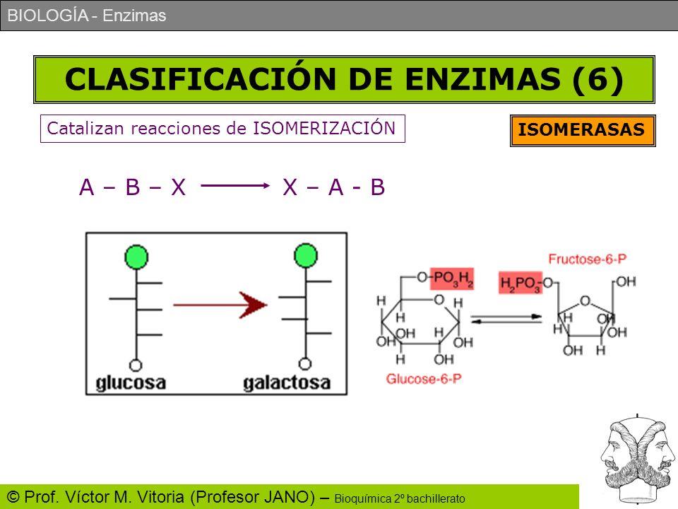 BIOLOGÍA - Enzimas © Prof. Víctor M. Vitoria (Profesor JANO) – Bioquímica 2º bachillerato CLASIFICACIÓN DE ENZIMAS (6) ISOMERASAS Catalizan reacciones