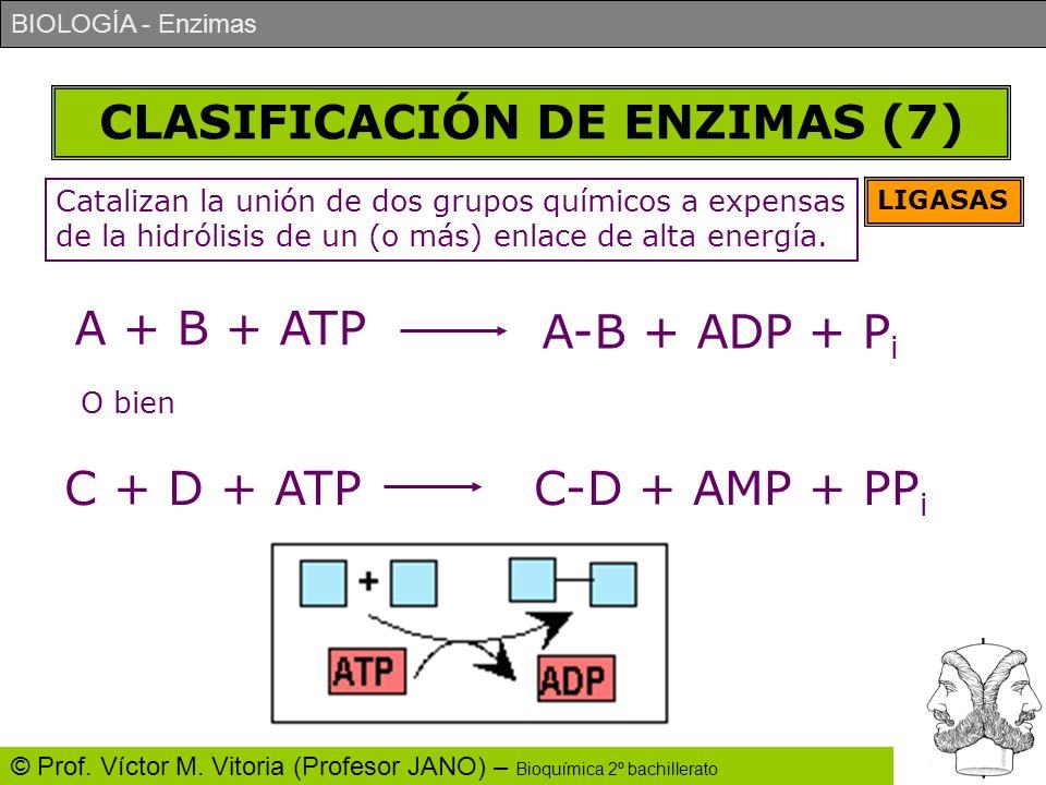 BIOLOGÍA - Enzimas © Prof. Víctor M. Vitoria (Profesor JANO) – Bioquímica 2º bachillerato CLASIFICACIÓN DE ENZIMAS (7) LIGASAS Catalizan la unión de d