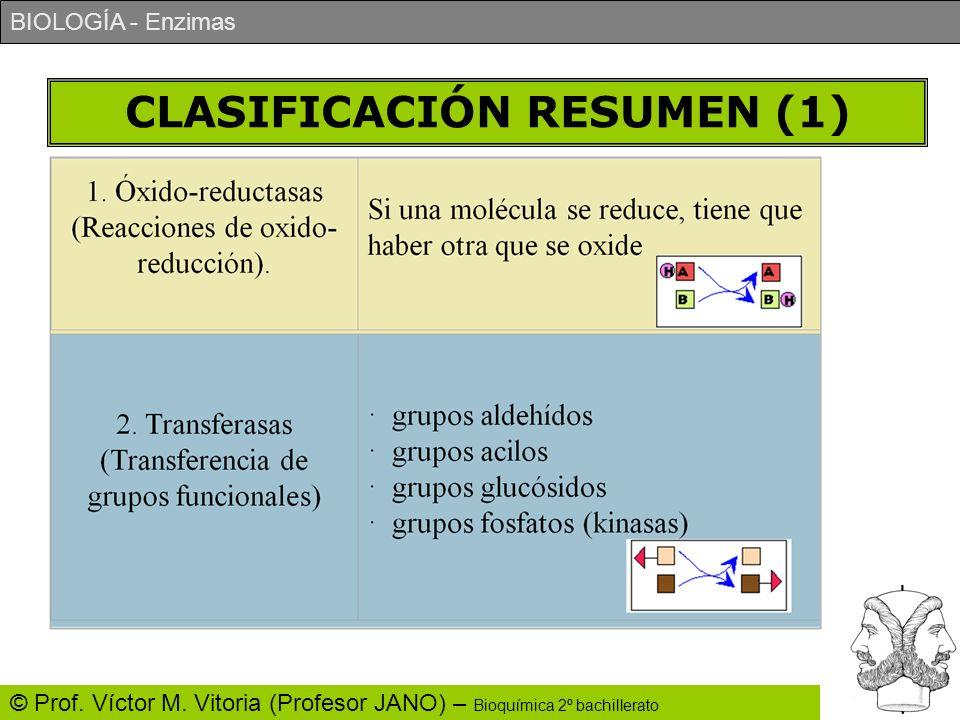 BIOLOGÍA - Enzimas © Prof. Víctor M. Vitoria (Profesor JANO) – Bioquímica 2º bachillerato CLASIFICACIÓN RESUMEN (1)