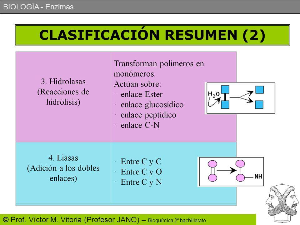 BIOLOGÍA - Enzimas © Prof. Víctor M. Vitoria (Profesor JANO) – Bioquímica 2º bachillerato CLASIFICACIÓN RESUMEN (2)