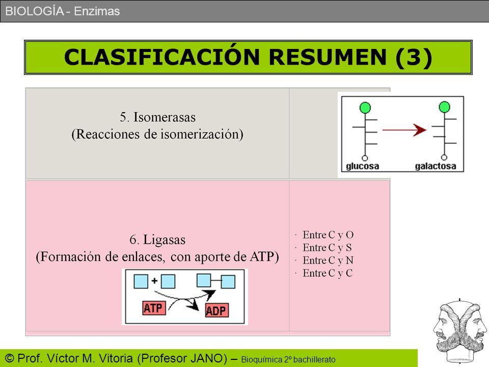 BIOLOGÍA - Enzimas © Prof. Víctor M. Vitoria (Profesor JANO) – Bioquímica 2º bachillerato CLASIFICACIÓN RESUMEN (3)