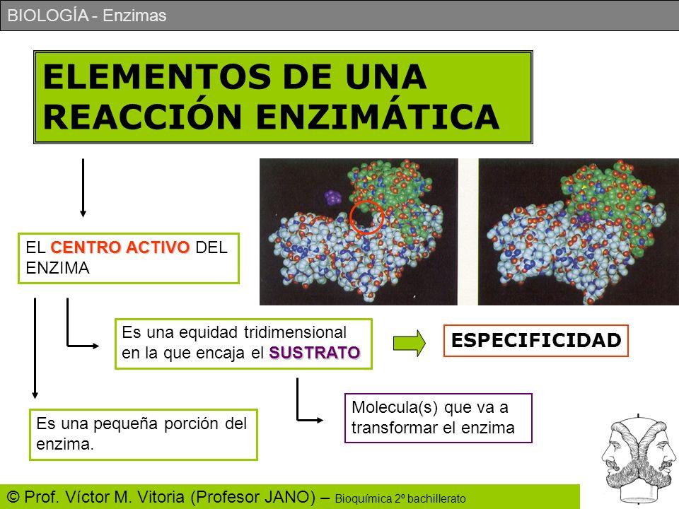 BIOLOGÍA - Enzimas © Prof. Víctor M. Vitoria (Profesor JANO) – Bioquímica 2º bachillerato ELEMENTOS DE UNA REACCIÓN ENZIMÁTICA CENTRO ACTIVO EL CENTRO