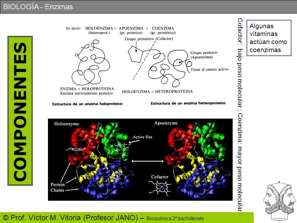 BIOLOGÍA - Enzimas © Prof. Víctor M. Vitoria (Profesor JANO) – Bioquímica 2º bachillerato COMPONENTES Cofactor: bajo peso molecular ; Coenzima: mayor