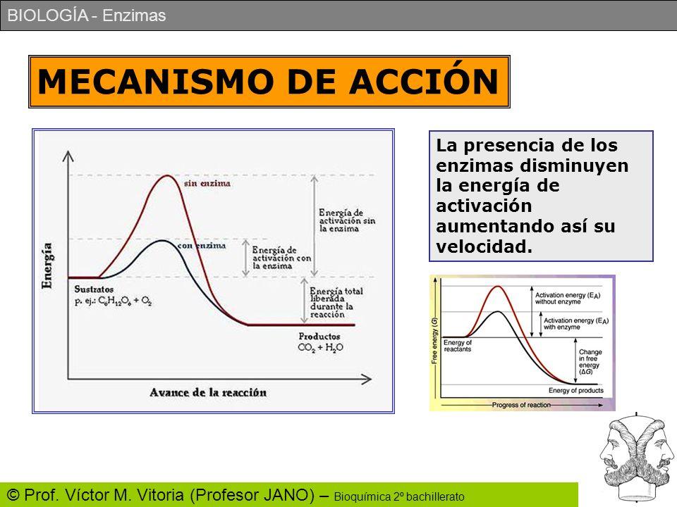 BIOLOGÍA - Enzimas © Prof. Víctor M. Vitoria (Profesor JANO) – Bioquímica 2º bachillerato MECANISMO DE ACCIÓN La presencia de los enzimas disminuyen l