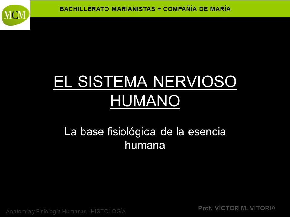 BACHILLERATO MARIANISTAS + COMPAÑÍA DE MARÍA Prof. VÍCTOR M. VITORIA Anatomía y Fisiología Humanas - HISTOLOGÍA EL SISTEMA NERVIOSO HUMANO La base fis