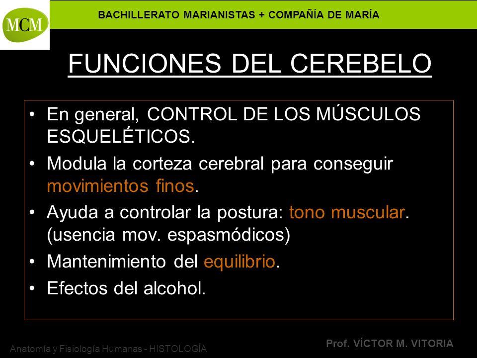 BACHILLERATO MARIANISTAS + COMPAÑÍA DE MARÍA Prof. VÍCTOR M. VITORIA Anatomía y Fisiología Humanas - HISTOLOGÍA FUNCIONES DEL CEREBELO En general, CON