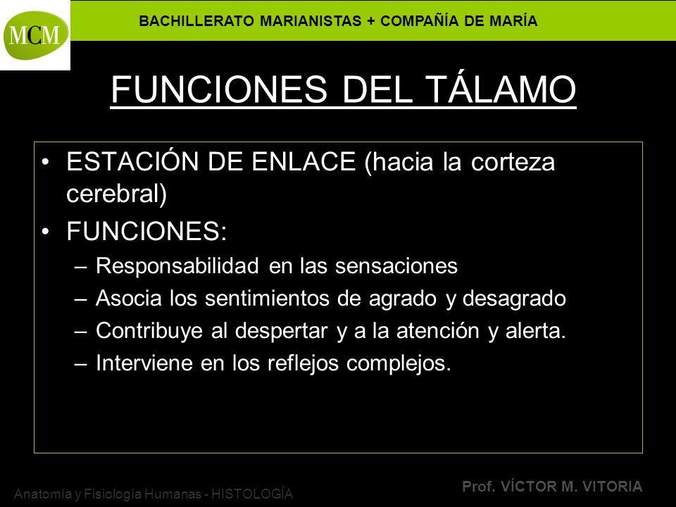 BACHILLERATO MARIANISTAS + COMPAÑÍA DE MARÍA Prof. VÍCTOR M. VITORIA Anatomía y Fisiología Humanas - HISTOLOGÍA FUNCIONES DEL TÁLAMO ESTACIÓN DE ENLAC