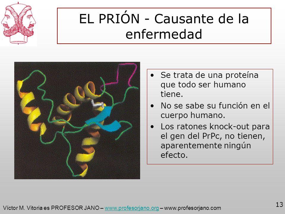 Víctor M. Vitoria es PROFESOR JANO – www.profesorjano.org – www.profesorjano.comwww.profesorjano.org 13 EL PRIÓN - Causante de la enfermedad Se trata