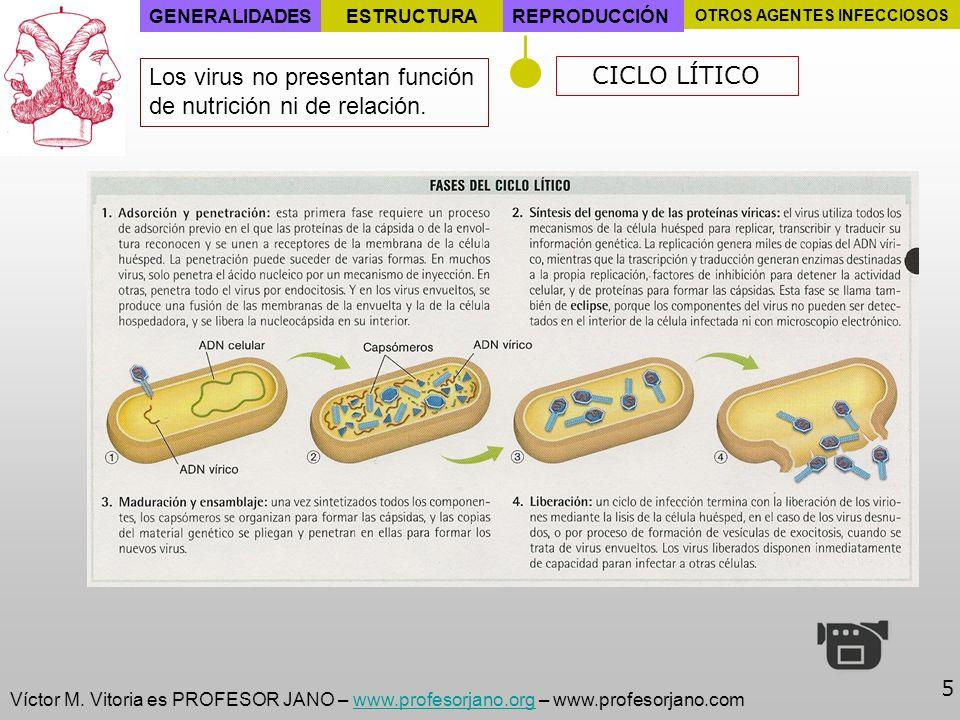 Víctor M. Vitoria es PROFESOR JANO – www.profesorjano.org – www.profesorjano.comwww.profesorjano.org 5 GENERALIDADESESTRUCTURAREPRODUCCIÓN OTROS AGENT