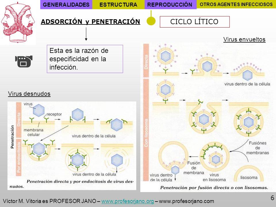 Víctor M. Vitoria es PROFESOR JANO – www.profesorjano.org – www.profesorjano.comwww.profesorjano.org 6 GENERALIDADESESTRUCTURAREPRODUCCIÓN OTROS AGENT