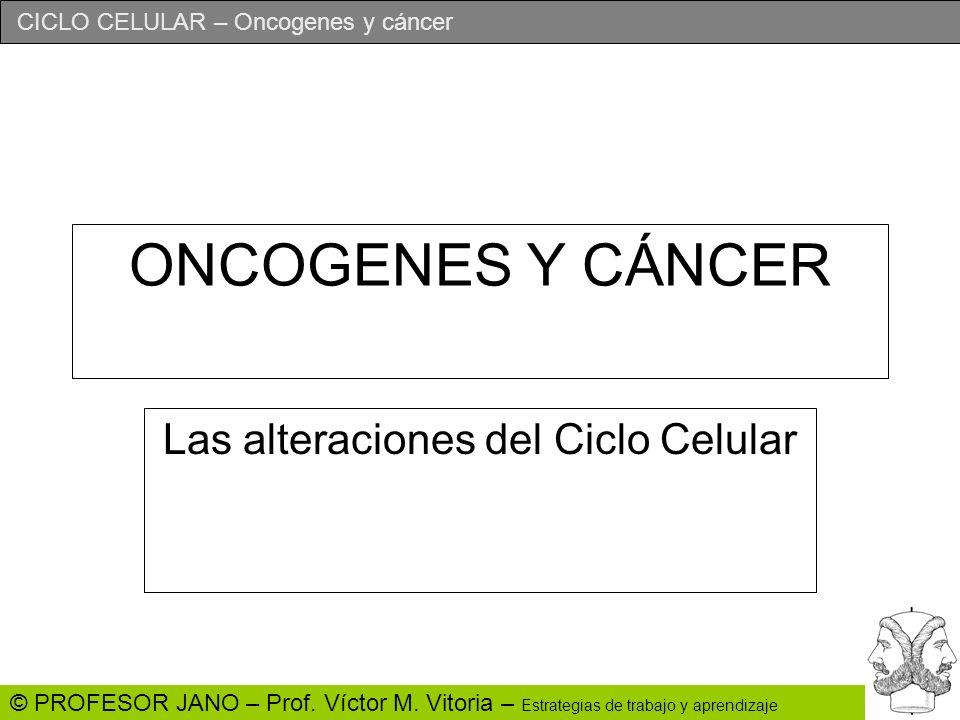 CICLO CELULAR – Oncogenes y cáncer © PROFESOR JANO – Prof. Víctor M. Vitoria – Estrategias de trabajo y aprendizaje ONCOGENES Y CÁNCER Las alteracione