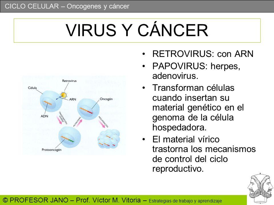 CICLO CELULAR – Oncogenes y cáncer © PROFESOR JANO – Prof. Víctor M. Vitoria – Estrategias de trabajo y aprendizaje VIRUS Y CÁNCER RETROVIRUS: con ARN