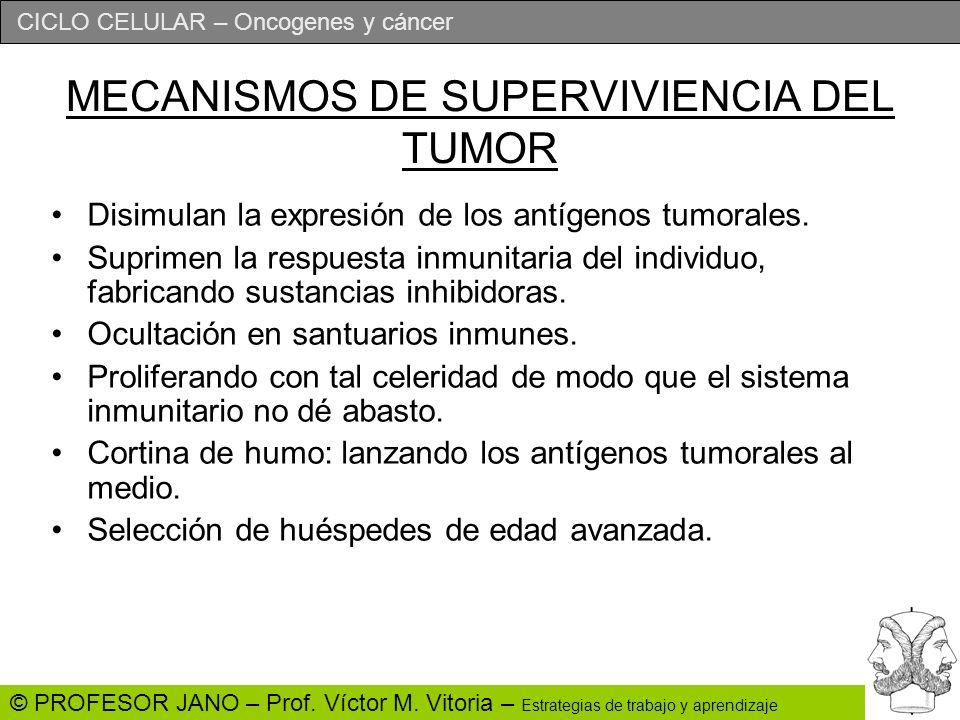 CICLO CELULAR – Oncogenes y cáncer © PROFESOR JANO – Prof. Víctor M. Vitoria – Estrategias de trabajo y aprendizaje MECANISMOS DE SUPERVIVIENCIA DEL T