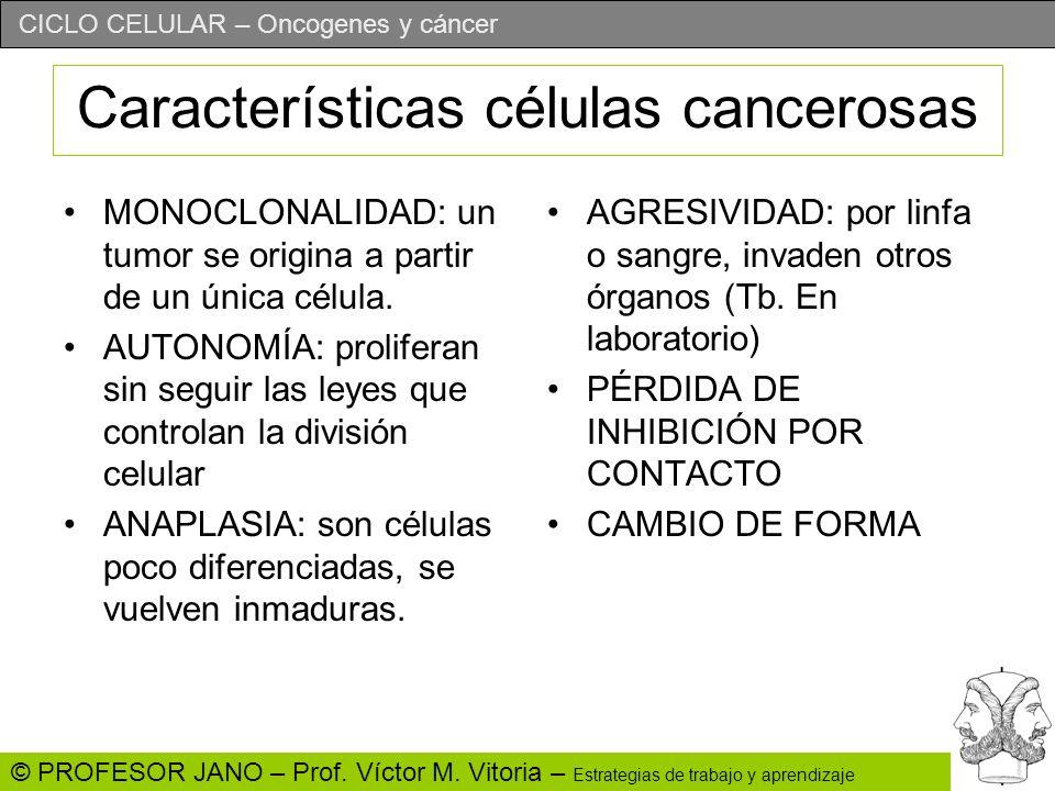 CICLO CELULAR – Oncogenes y cáncer © PROFESOR JANO – Prof. Víctor M. Vitoria – Estrategias de trabajo y aprendizaje Características células cancerosas