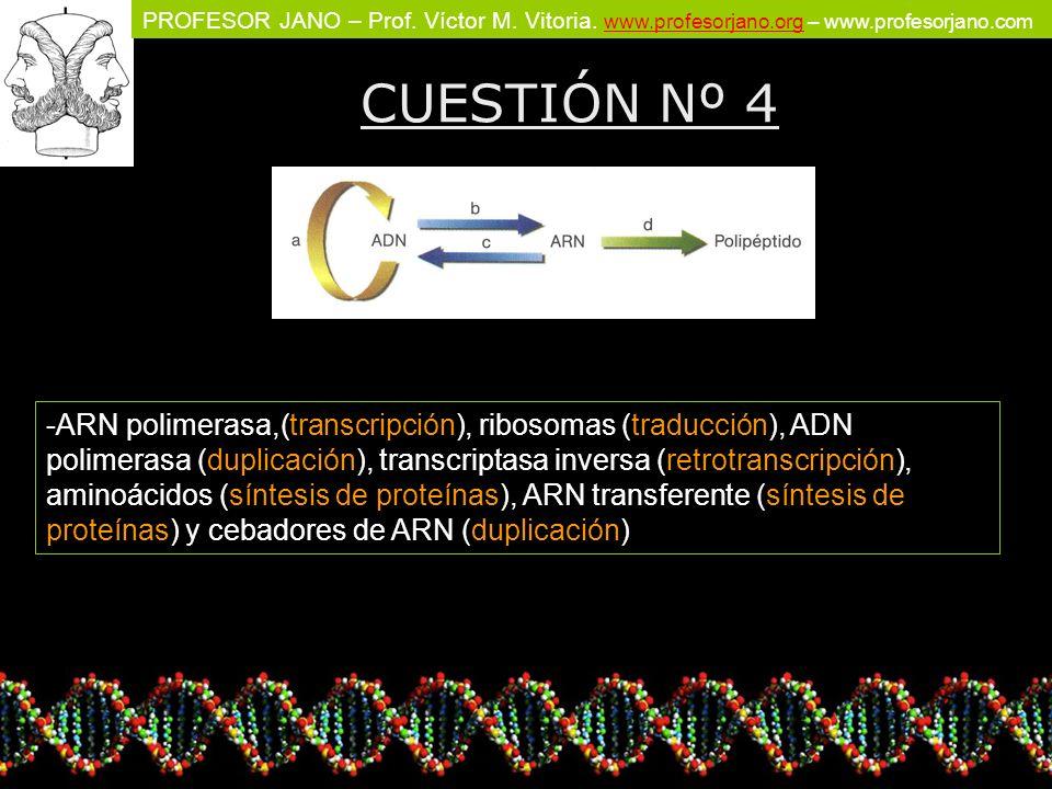 PROFESOR JANO – Prof. Víctor M. Vitoria. www.profesorjano.org – www.profesorjano.com www.profesorjano.org CUESTIÓN Nº 4 -ARN polimerasa,(transcripción