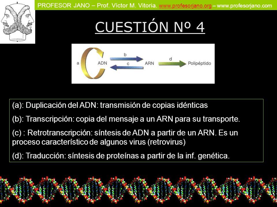 PROFESOR JANO – Prof. Víctor M. Vitoria. www.profesorjano.org – www.profesorjano.com www.profesorjano.org CUESTIÓN Nº 4 (a): Duplicación del ADN: tran