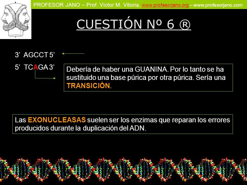 PROFESOR JANO – Prof. Víctor M. Vitoria. www.profesorjano.org – www.profesorjano.com www.profesorjano.org CUESTIÓN Nº 6 ® 3 AGCCT 5 5 TCAGA 3 Debería