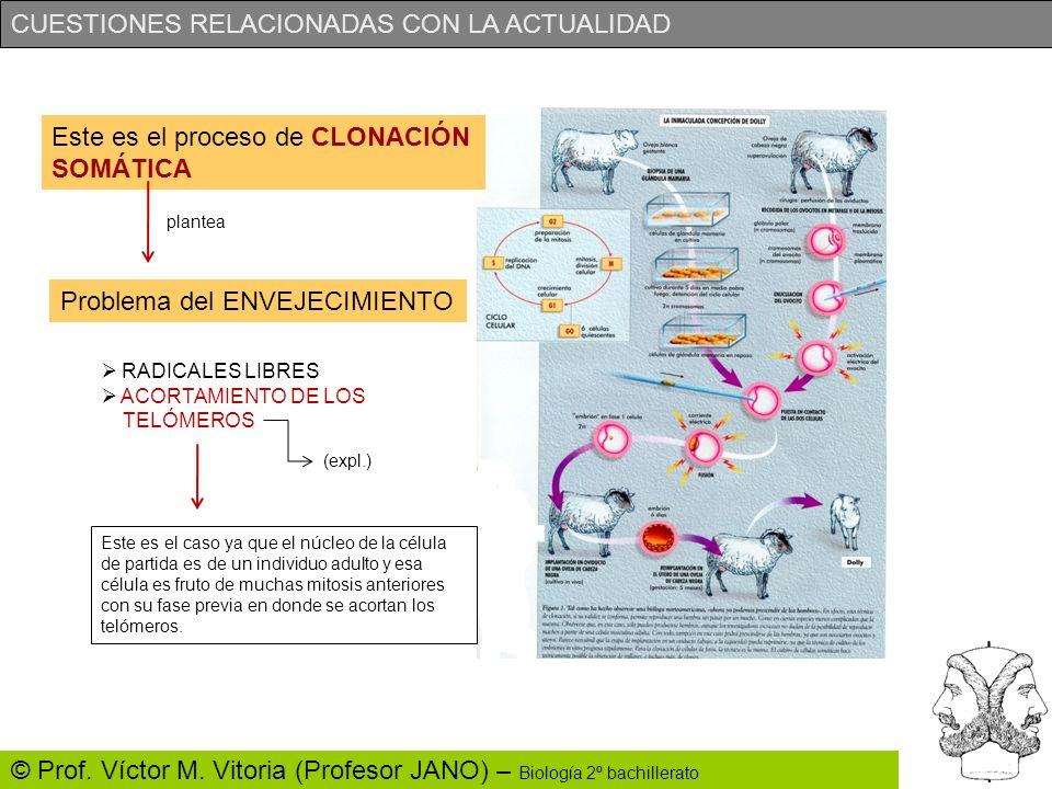 CUESTIONES RELACIONADAS CON LA ACTUALIDAD © Prof. Víctor M. Vitoria (Profesor JANO) – Biología 2º bachillerato Este es el proceso de CLONACIÓN SOMÁTIC