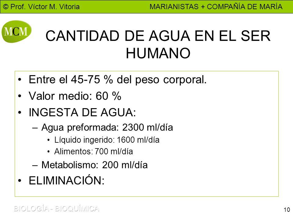 © Prof. Víctor M. Vitoria MARIANISTAS + COMPAÑÍA DE MARÍA 10 CANTIDAD DE AGUA EN EL SER HUMANO Entre el 45-75 % del peso corporal. Valor medio: 60 % I