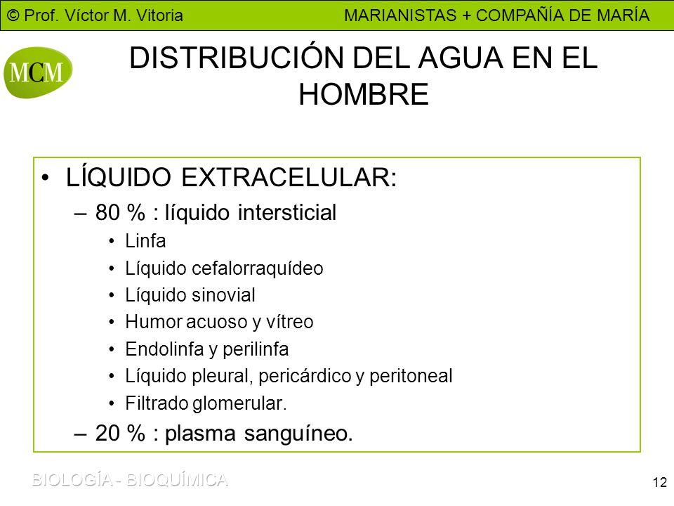 © Prof. Víctor M. Vitoria MARIANISTAS + COMPAÑÍA DE MARÍA 12 DISTRIBUCIÓN DEL AGUA EN EL HOMBRE LÍQUIDO EXTRACELULAR: –80 % : líquido intersticial Lin
