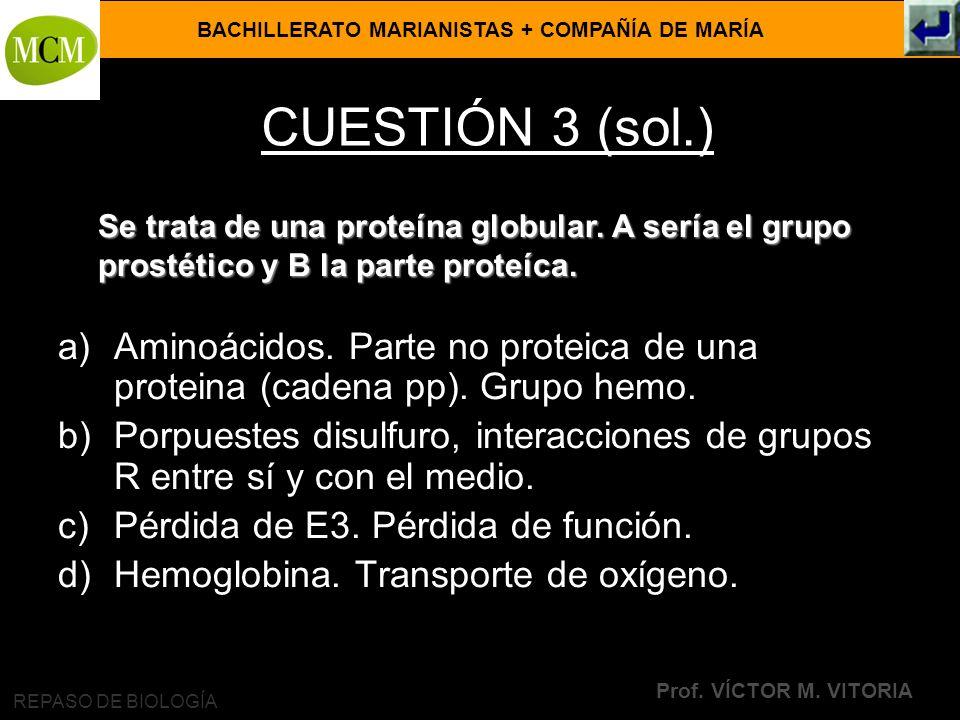BACHILLERATO MARIANISTAS + COMPAÑÍA DE MARÍA Prof. VÍCTOR M. VITORIA REPASO DE BIOLOGÍA CUESTIÓN 3 (sol.) a)Aminoácidos. Parte no proteica de una prot