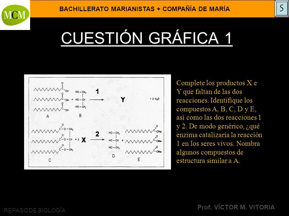BACHILLERATO MARIANISTAS + COMPAÑÍA DE MARÍA Prof. VÍCTOR M. VITORIA REPASO DE BIOLOGÍA CUESTIÓN GRÁFICA 1 Complete los productos X e Y que faltan de