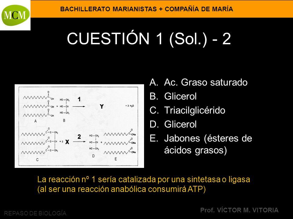 BACHILLERATO MARIANISTAS + COMPAÑÍA DE MARÍA Prof. VÍCTOR M. VITORIA REPASO DE BIOLOGÍA CUESTIÓN 1 (Sol.) - 2 A.Ac. Graso saturado B.Glicerol C.Triaci