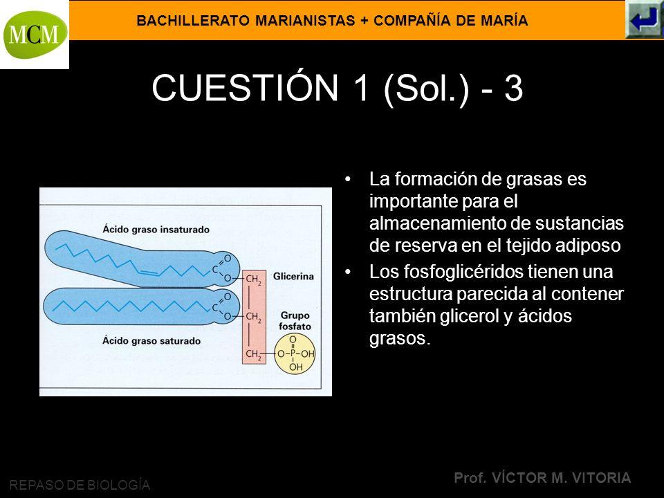 BACHILLERATO MARIANISTAS + COMPAÑÍA DE MARÍA Prof. VÍCTOR M. VITORIA REPASO DE BIOLOGÍA CUESTIÓN 1 (Sol.) - 3 La formación de grasas es importante par