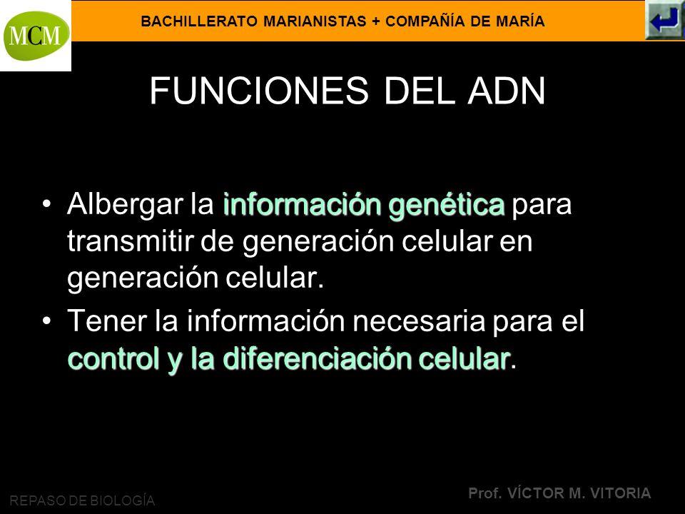 BACHILLERATO MARIANISTAS + COMPAÑÍA DE MARÍA Prof. VÍCTOR M. VITORIA REPASO DE BIOLOGÍA FUNCIONES DEL ADN información genéticaAlbergar la información