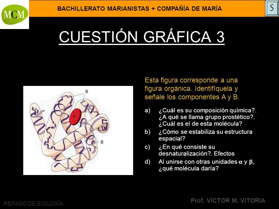 BACHILLERATO MARIANISTAS + COMPAÑÍA DE MARÍA Prof. VÍCTOR M. VITORIA REPASO DE BIOLOGÍA CUESTIÓN GRÁFICA 3 a)¿Cuál es su composición química?. ¿A qué