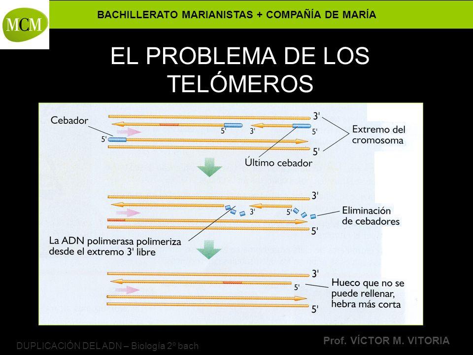 BACHILLERATO MARIANISTAS + COMPAÑÍA DE MARÍA Prof. VÍCTOR M. VITORIA DUPLICACIÓN DEL ADN – Biología 2º bach EL PROBLEMA DE LOS TELÓMEROS