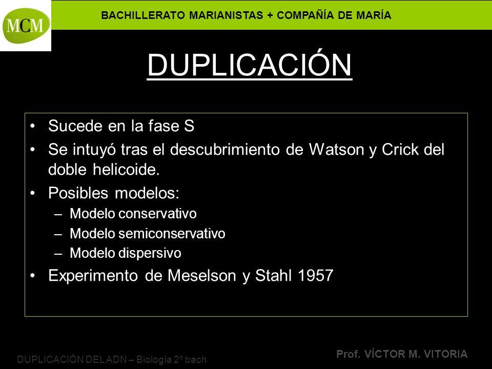 BACHILLERATO MARIANISTAS + COMPAÑÍA DE MARÍA Prof. VÍCTOR M. VITORIA DUPLICACIÓN DEL ADN – Biología 2º bach DUPLICACIÓN Sucede en la fase S Se intuyó