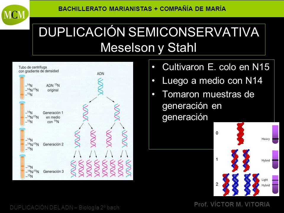 BACHILLERATO MARIANISTAS + COMPAÑÍA DE MARÍA Prof. VÍCTOR M. VITORIA DUPLICACIÓN DEL ADN – Biología 2º bach DUPLICACIÓN SEMICONSERVATIVA Meselson y St
