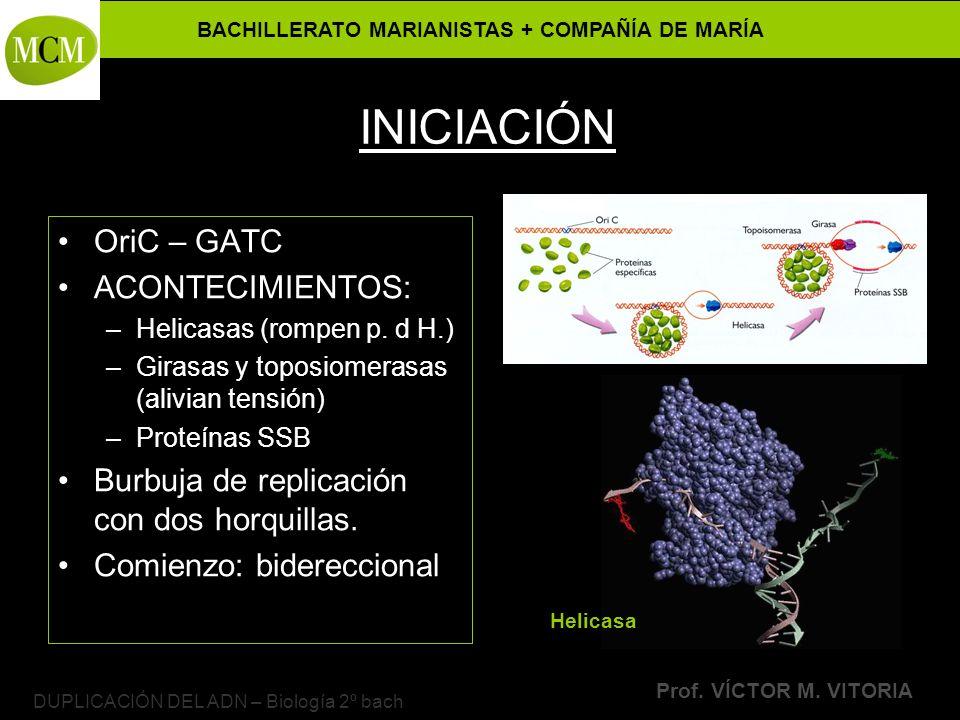 BACHILLERATO MARIANISTAS + COMPAÑÍA DE MARÍA Prof. VÍCTOR M. VITORIA DUPLICACIÓN DEL ADN – Biología 2º bach INICIACIÓN OriC – GATC ACONTECIMIENTOS: –H