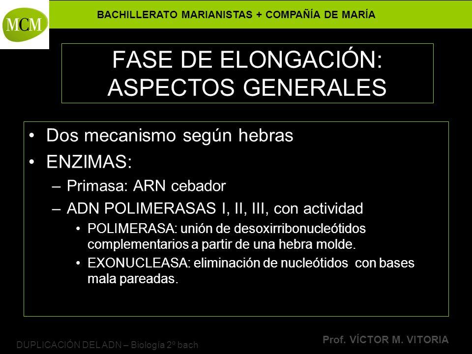 BACHILLERATO MARIANISTAS + COMPAÑÍA DE MARÍA Prof. VÍCTOR M. VITORIA DUPLICACIÓN DEL ADN – Biología 2º bach FASE DE ELONGACIÓN: ASPECTOS GENERALES Dos