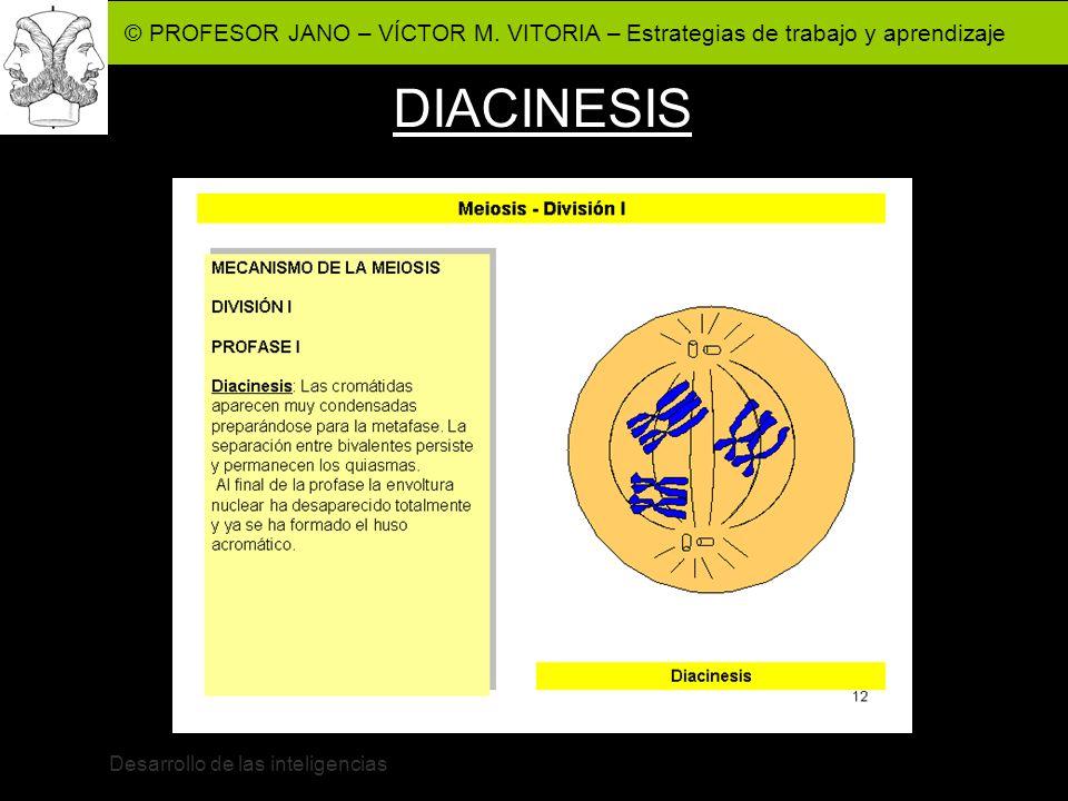 © PROFESOR JANO – VÍCTOR M. VITORIA – Estrategias de trabajo y aprendizaje Desarrollo de las inteligencias DIACINESIS