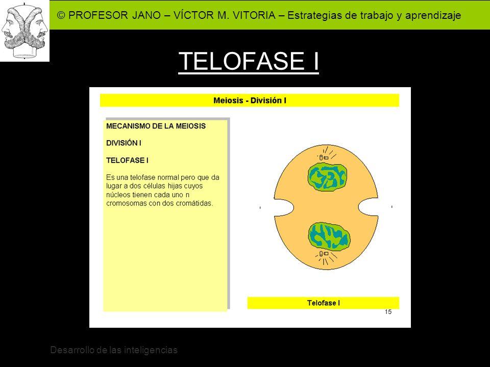 © PROFESOR JANO – VÍCTOR M. VITORIA – Estrategias de trabajo y aprendizaje Desarrollo de las inteligencias TELOFASE I