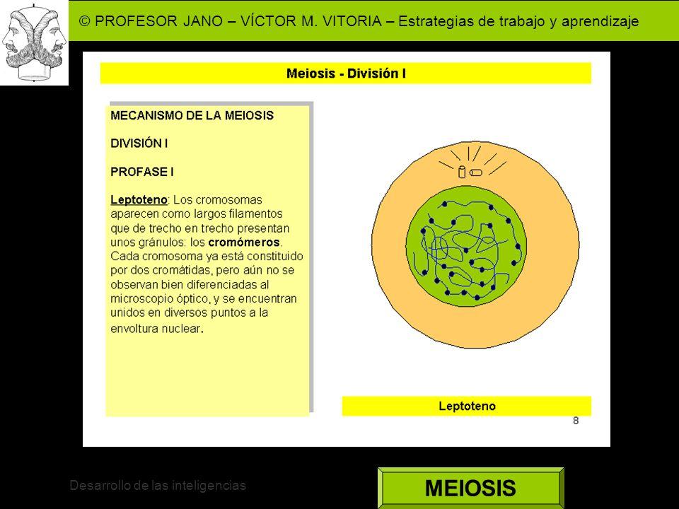 © PROFESOR JANO – VÍCTOR M. VITORIA – Estrategias de trabajo y aprendizaje Desarrollo de las inteligencias MEIOSIS