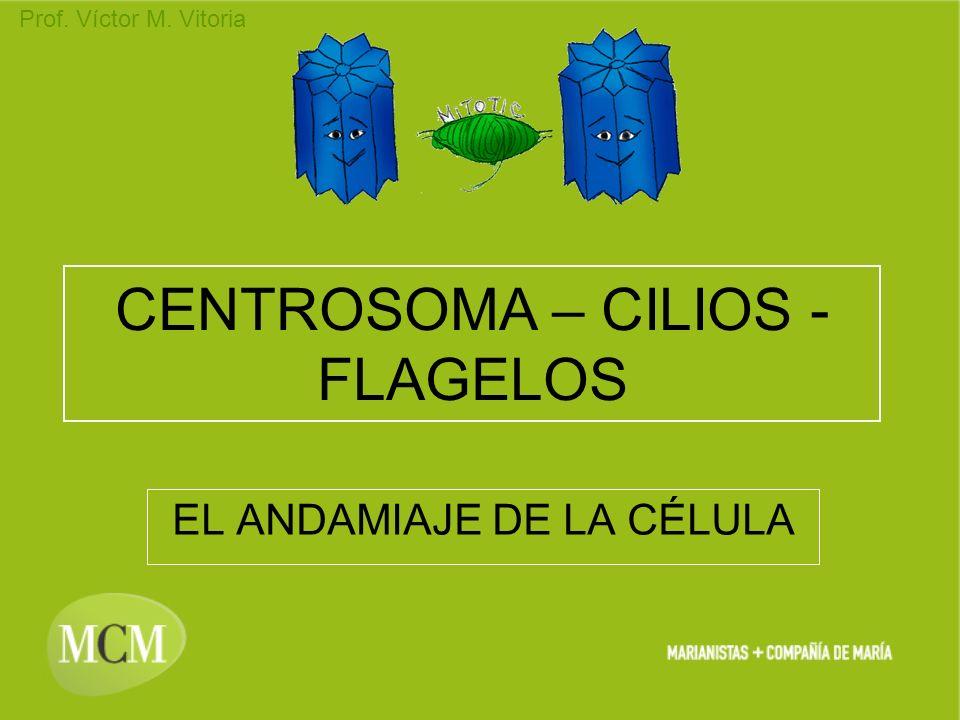 Prof. Víctor M. Vitoria CENTROSOMA – CILIOS - FLAGELOS EL ANDAMIAJE DE LA CÉLULA