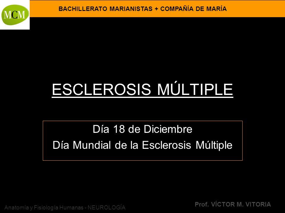 BACHILLERATO MARIANISTAS + COMPAÑÍA DE MARÍA Prof. VÍCTOR M. VITORIA Anatomía y Fisiología Humanas - NEUROLOGÍA ESCLEROSIS MÚLTIPLE Día 18 de Diciembr