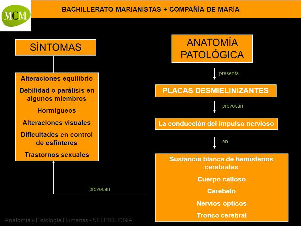 BACHILLERATO MARIANISTAS + COMPAÑÍA DE MARÍA Prof. VÍCTOR M. VITORIA Anatomía y Fisiología Humanas - NEUROLOGÍA SÍNTOMAS ANATOMÍA PATOLÓGICA Alteracio