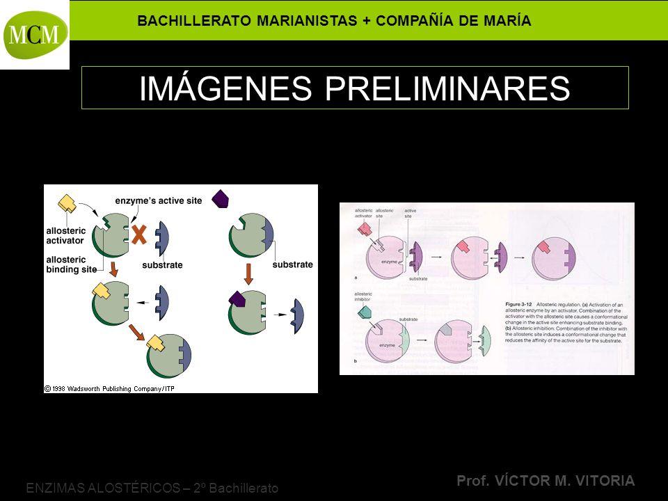 BACHILLERATO MARIANISTAS + COMPAÑÍA DE MARÍA Prof. VÍCTOR M. VITORIA ENZIMAS ALOSTÉRICOS – 2º Bachillerato IMÁGENES PRELIMINARES