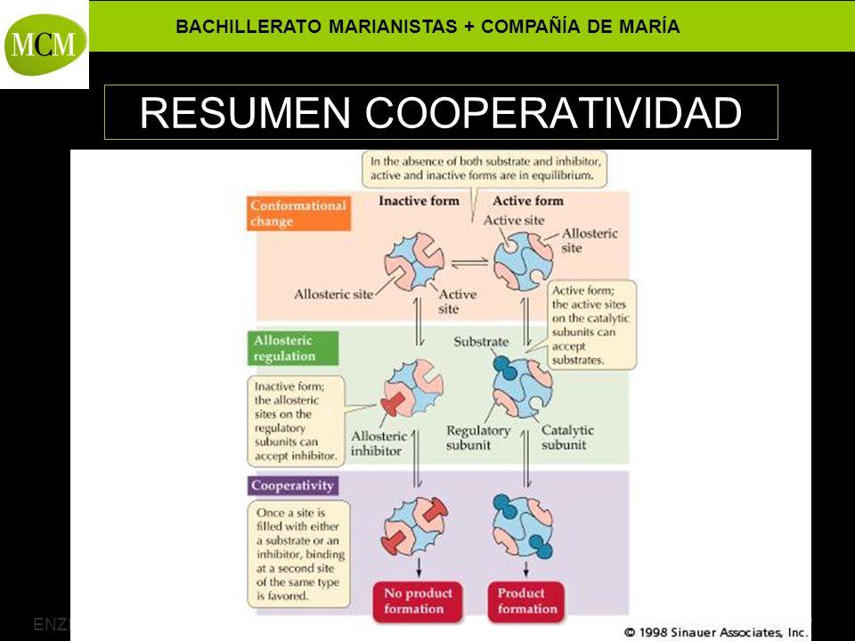 BACHILLERATO MARIANISTAS + COMPAÑÍA DE MARÍA Prof. VÍCTOR M. VITORIA ENZIMAS ALOSTÉRICOS – 2º Bachillerato RESUMEN COOPERATIVIDAD